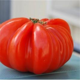 Tomate Beefsteak Bio graines en folie