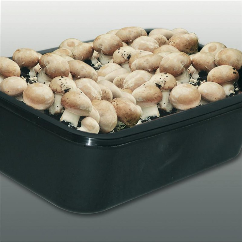 kit 3 litres culture champignons bruns de paris naturiou. Black Bedroom Furniture Sets. Home Design Ideas